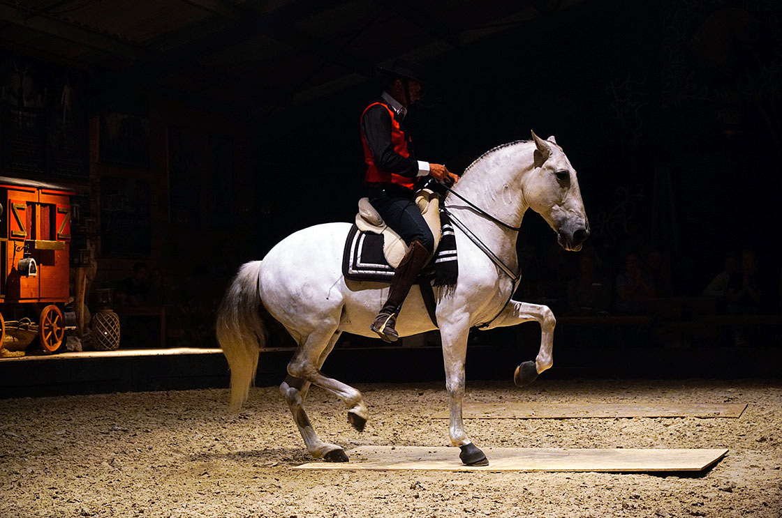 activité_divertissement_arles_chevaux